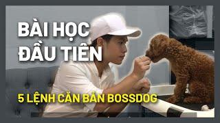 Mẹo dạy cún chạy lại kнi chủ gọi | Huấn luyện chó cơ bản BossDog (BOSS280719)