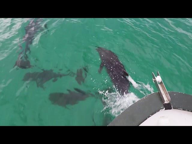 Dolphins everywhere! Loreto, Baja, Mexico.