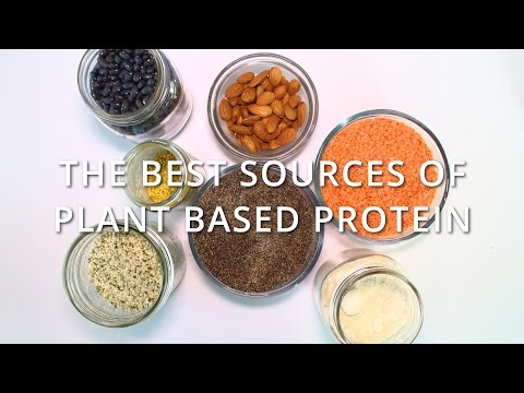 The Best Sources of Plant Based Protein