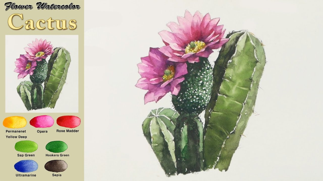 Blooming Cactus Drawing