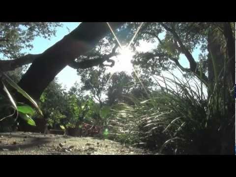 Music using Garageband - Vine Saga experimental music video