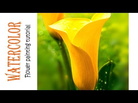 Watercolor YELLOW CALLA LILY Painting Demo | Flower painting – 1 | Kalaayug