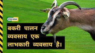 Goat Rearing is a profitable business in India - बकरी पालन व्यवसाय एक लाभकारी व्यवसाय है।