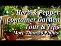 JUNE: Tips & Harvest of the Herb & Pepper Container Garden + the Green Stalk