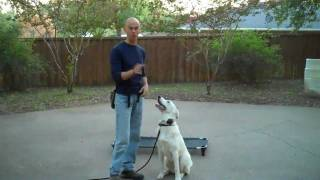 Tinker The Akbash | Redeeming Dogs | Fort Worth Dog Training