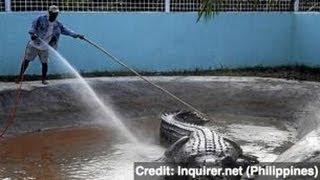 World's Largest Crocodile Dies in Captivity - Newsy