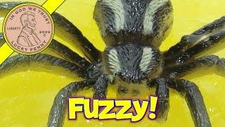 Spider Putty,  Creepy Crawler In Yellow!