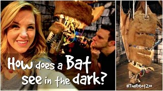 How does a bat see in the dark? | The Robot Zoo | Maddie Moate