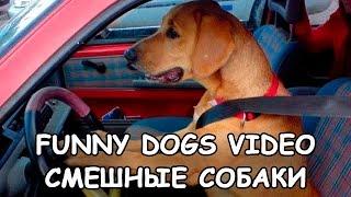 Funny Dogs video Смешные собаки видео Собаки приколы