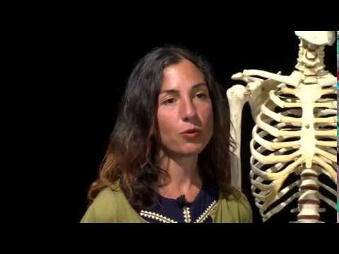 ARPA309 Zooarchaeology - Sexing the Human Skeleton