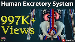 Learn Biology: Human Excretory System