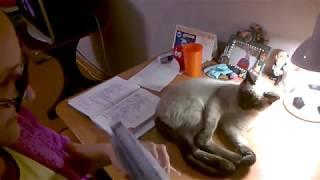 Коты - лучшие помощники по домашнему заданию.