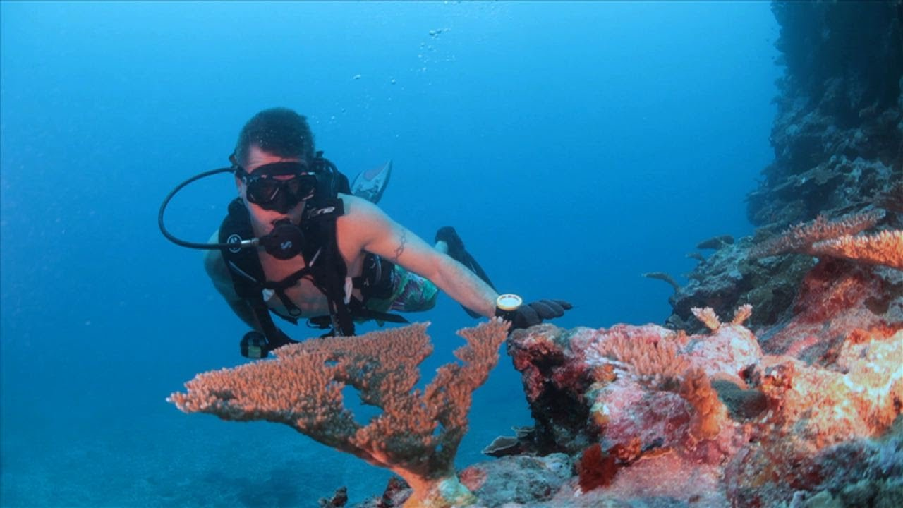 Scuba Diving Samoa 2013, Travel Video Guide