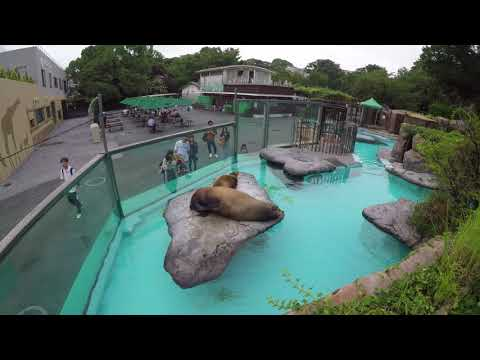 Tokyo Ueno Zoo Japan