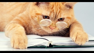 Я и кот Песня на стихи Валерия Брюсова