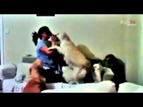 Perros Defienden A Nino De Los Golpes De Su Madre Youtube