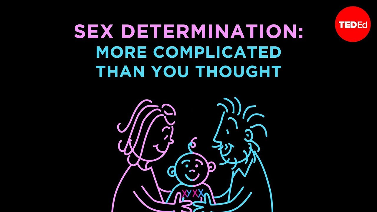 sex determination and sex chromosomes boys in Caloundra