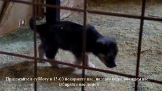 Приглашаем покормить бездомных собак и кошек в Старом Осколе