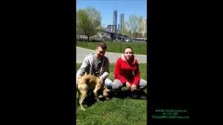 Metro Dog Training Vlad and Masha Testimonial
