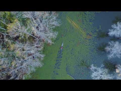 Cypress Swamps, Louisiana, Texas, USA. Creative Travel Photography by Olga Loschinina