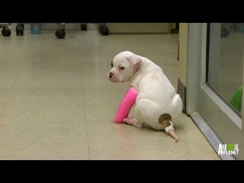 Only a Precious Puppy Could Make Wearing Casts Look So Cute