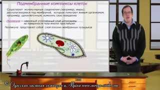 Подмембранные структуры клеток