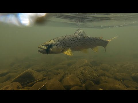 Fly Fishing The Black River