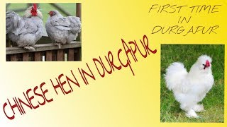 CHINESE HEN IN DURGAPUR || NEW HEN IN DURGAPUR || by comedy clip-joint