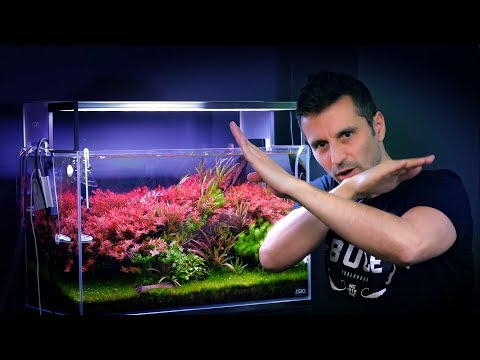 AQUARIUM UPDATE - MAKE YOUR PLANTED TANK BETTER IN MINUTES