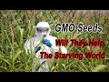 Are Biotech Companies Creating GMO Seeds To Help Feed The Starving World? by McKay Jenkins
