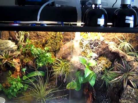 Chinese Water Dragon Paludarium Terrarium Youtube