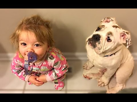 Cute Dogs Love Babies Compilation