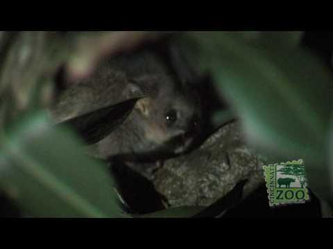 Cute Baby Galago's-Cincinnati Zoo