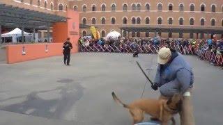 Polizeihund gegen einen täter mit einem schlagstock