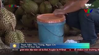Kon Tum: Phát hiện hơn 1,2 tấn sầu riêng đang chuẩn bị ngâm chín bằng hóa chất
