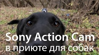 Sony Action Cam в приюте для собак