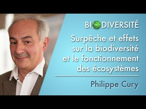 Overfishing And The Impacts On Biodiversity And On The Functioning Of Ecosystems