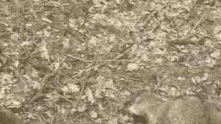 Martwe zwierzę w lesie