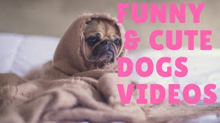 funny and cute dogs videos