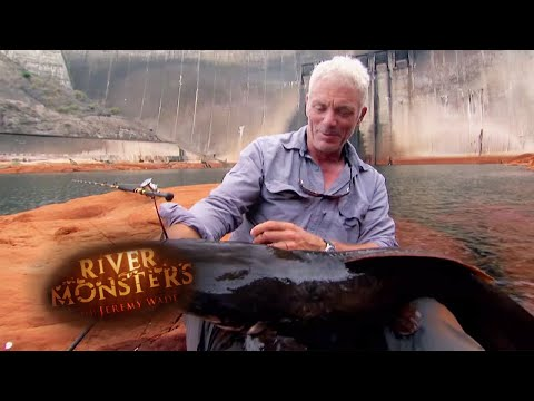 Catching The Vundu - River Monsters