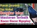 Pancingan Kacer Ampuh  Teruji Agar Kacer Macet Bisu Gacor Ngeplong Wajib Di Tes Dicoba  Mp3 - Mp4 Download