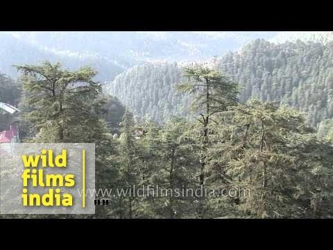Shimla : Queen of the Hills