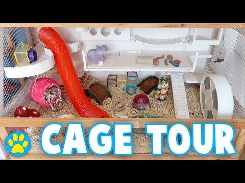Colourful Hamster Cage Tour | Iodine