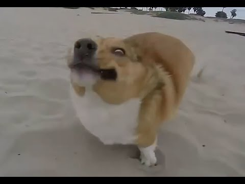 Dogs' Most Epic Fails Compilation