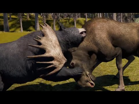 American Black Bear – All prey hunting animation in SLOW MOTION