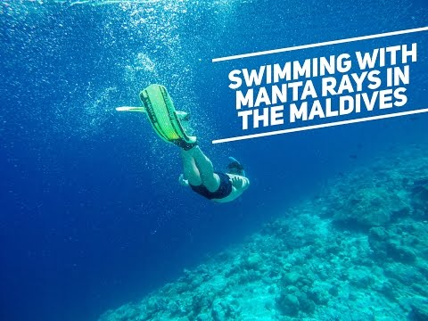 SWIMMING WITH MANTA RAYS AND DOLPHINS IN THE MALDIVES || Maldives Travel Vlogs - Part 3