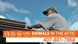 Exterminate Rats, Get Rid of Rats & Rodents, Remove Rats Orlando, FL