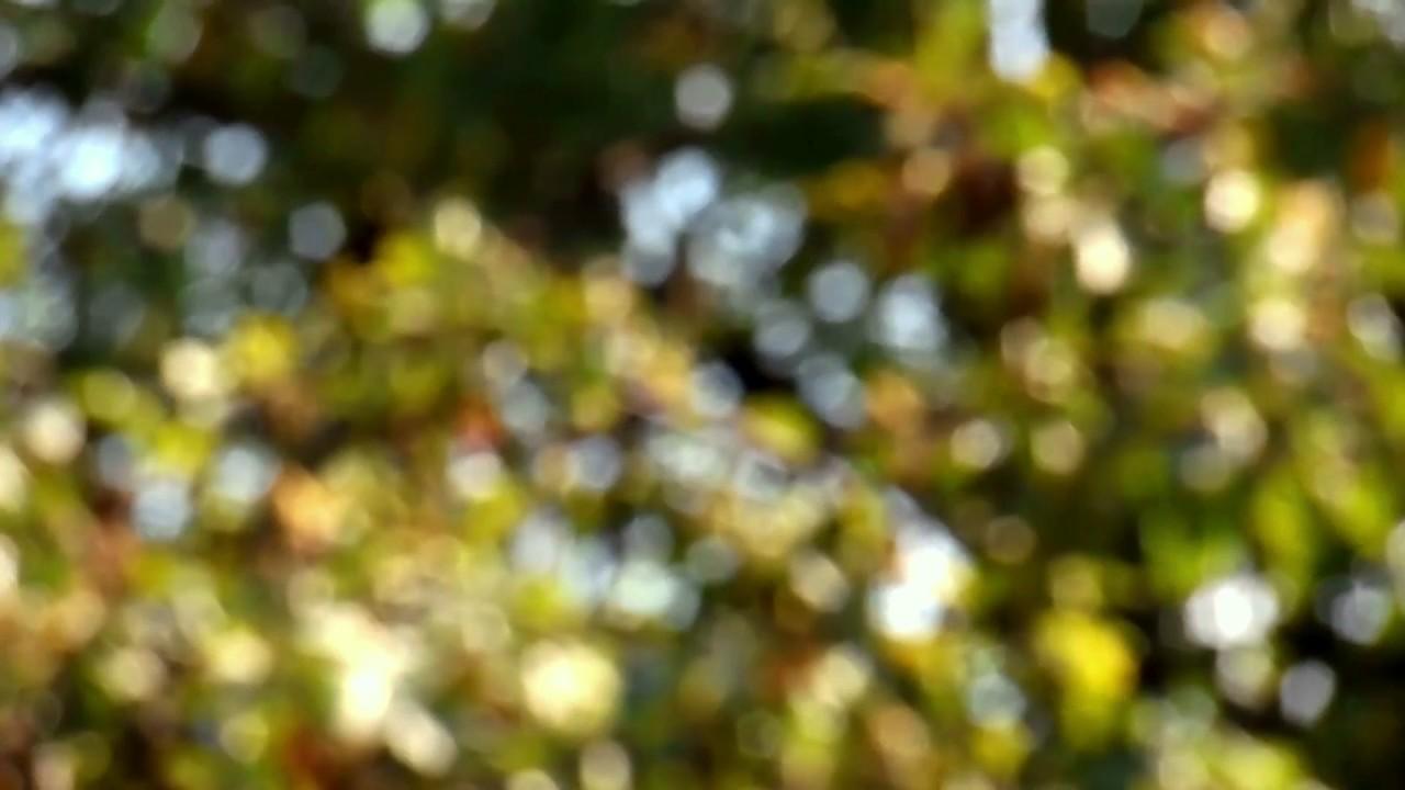 Obs Blur Background