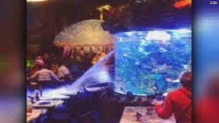It's a wet world after Disney fish tank cracks