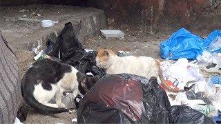 """فيديو  من أمام منزله.. القصة الكاملة لـ""""عجوز الساحل"""" بعدما نهشته القطط"""